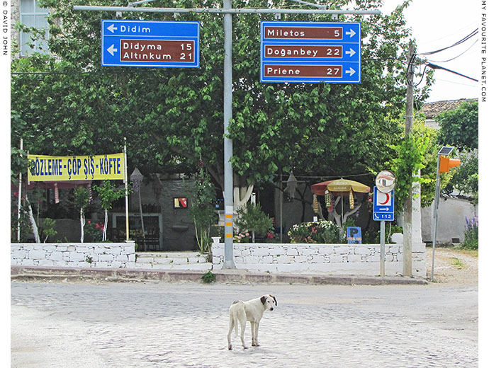 A white dog at the crossroads in Akköy village, Turkey at The Cheshire Cat Blog