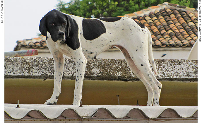A dog on the roof of a shop in Akköy village, Turkey at The Cheshire Cat Blog