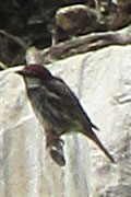 A sparrow on a column of the Artemision in Ephesus, Turkey