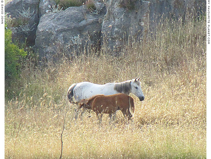 A mare and foal in a field near the Cave of the Seven Sleepers, Ephesus, Turkey at The Cheshire Cat Blog