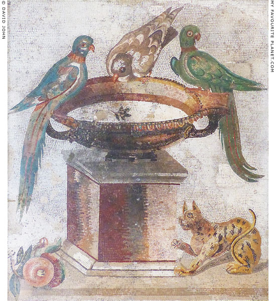 A mosaic of three birds in Naples at My Favourite Planet